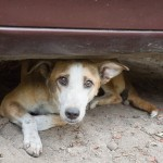 Street Dogs in India